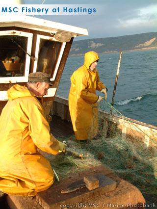 msc fisheries hastings